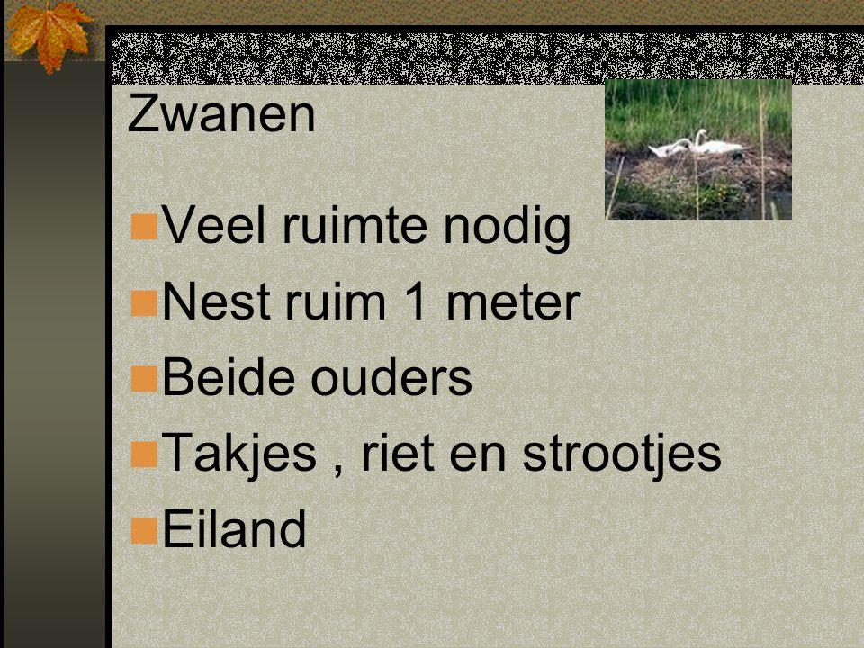 Zwanen Veel ruimte nodig Nest ruim 1 meter Beide ouders Takjes , riet en strootjes Eiland