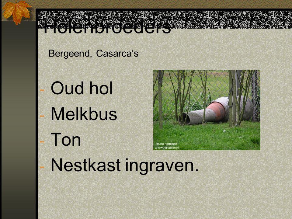 Holenbroeders Bergeend, Casarca's