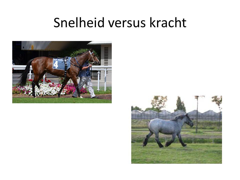 Snelheid versus kracht