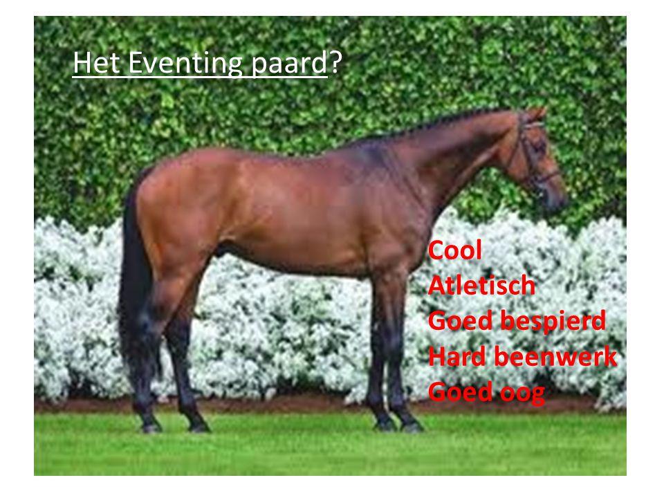 Het Eventing paard Cool Atletisch Goed bespierd Hard beenwerk