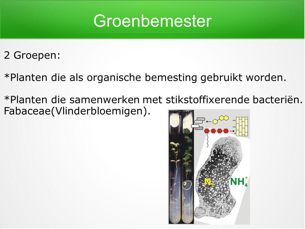 Groenbemester 2 Groepen: