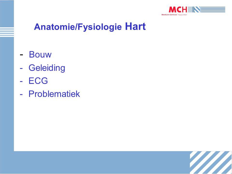 Anatomie/Fysiologie Hart