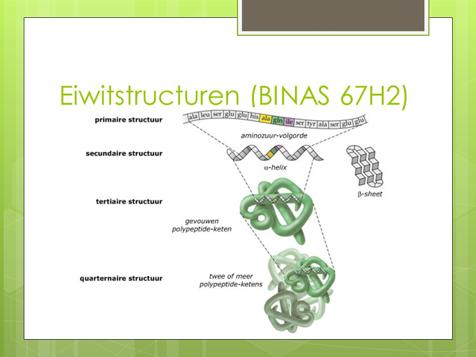 Eiwitstructuren (BINAS 67H2)
