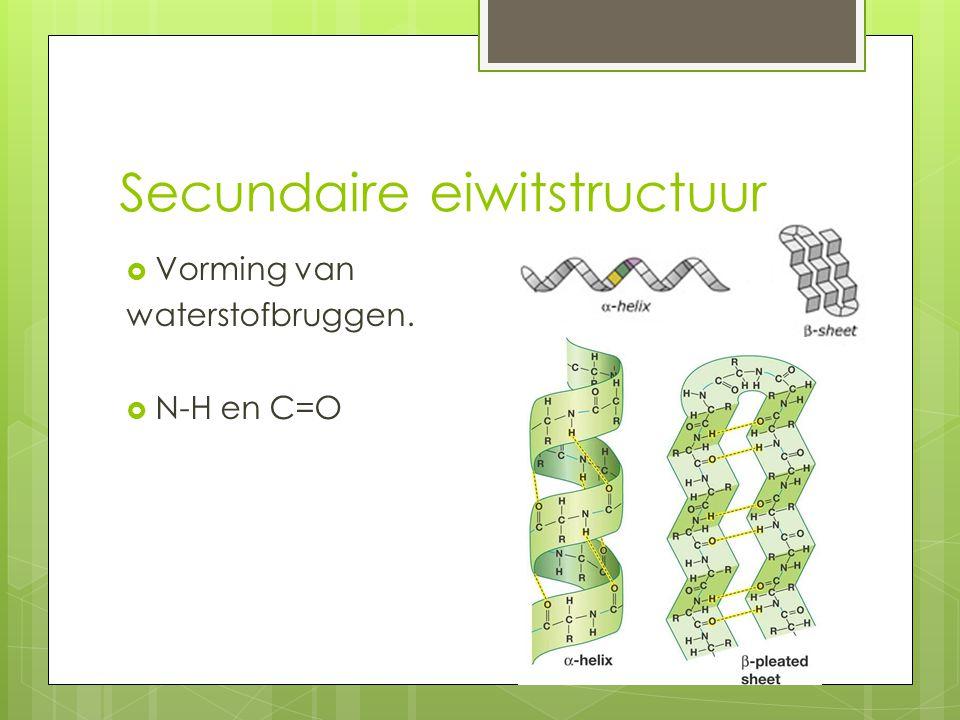 Secundaire eiwitstructuur