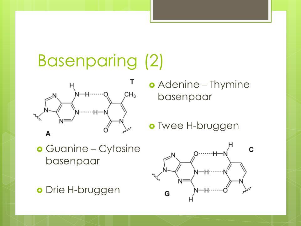 Basenparing (2) Adenine – Thymine basenpaar Twee H-bruggen