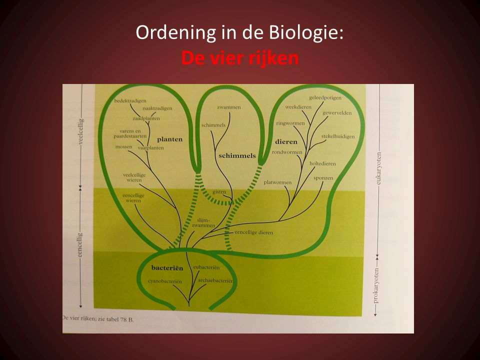 Ordening in de Biologie: De vier rijken