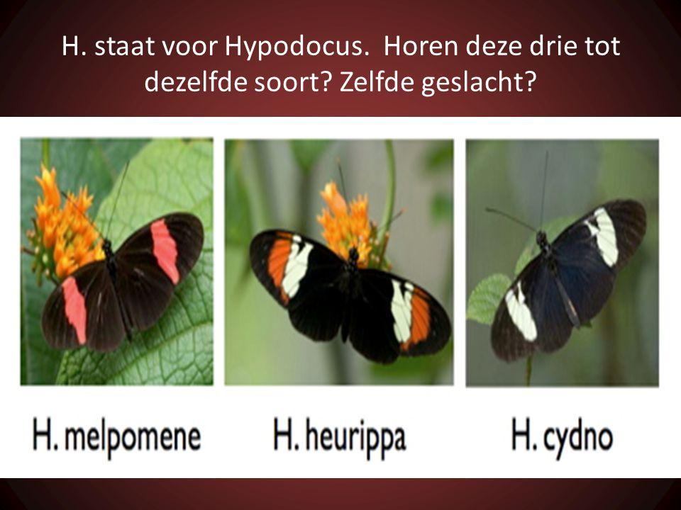 H. staat voor Hypodocus. Horen deze drie tot dezelfde soort