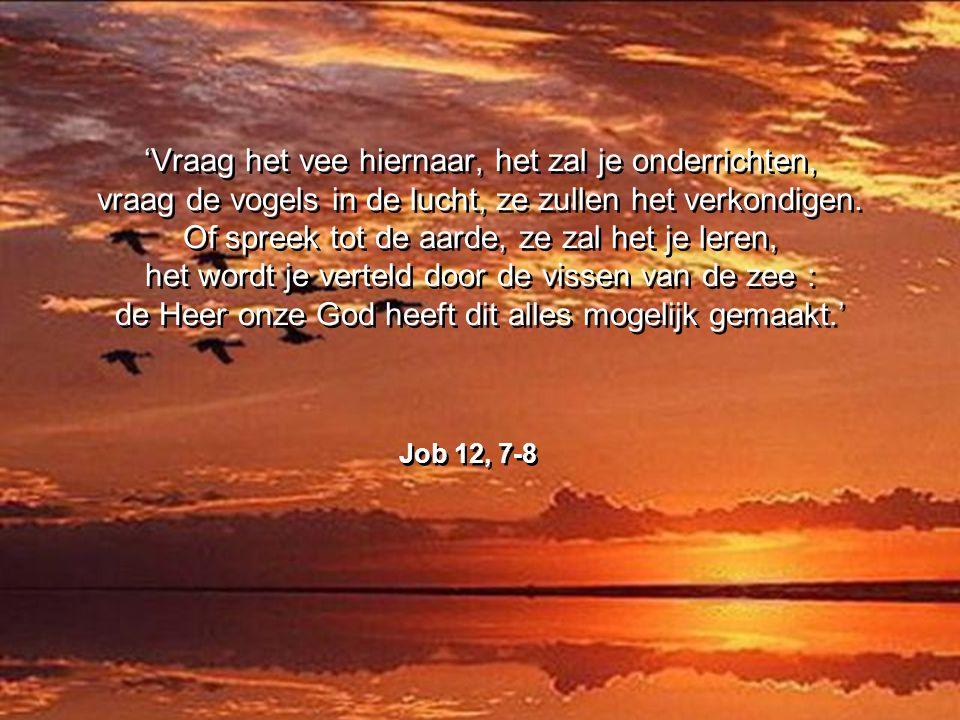 'Vraag het vee hiernaar, het zal je onderrichten, vraag de vogels in de lucht, ze zullen het verkondigen. Of spreek tot de aarde, ze zal het je leren, het wordt je verteld door de vissen van de zee : de Heer onze God heeft dit alles mogelijk gemaakt.'
