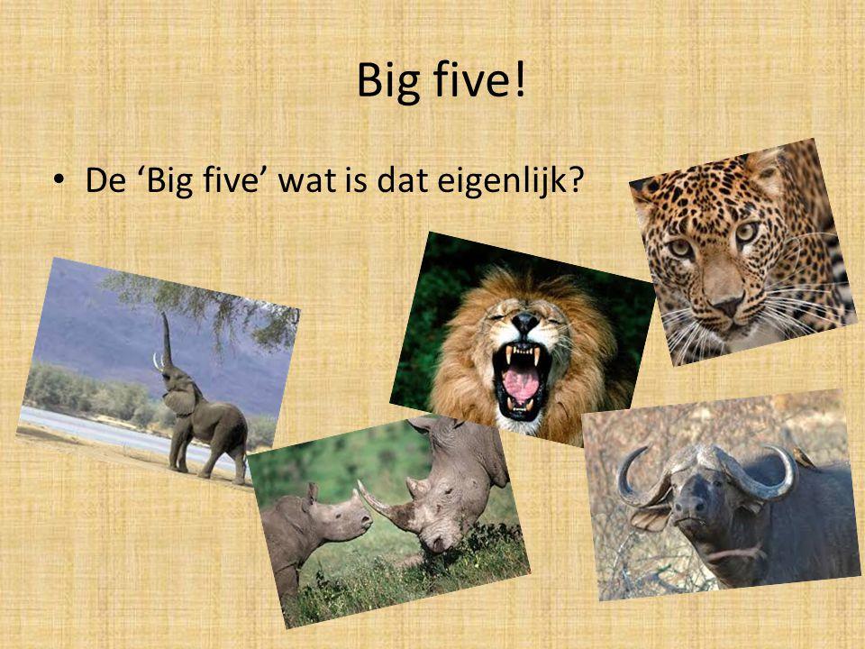 Big five! De 'Big five' wat is dat eigenlijk