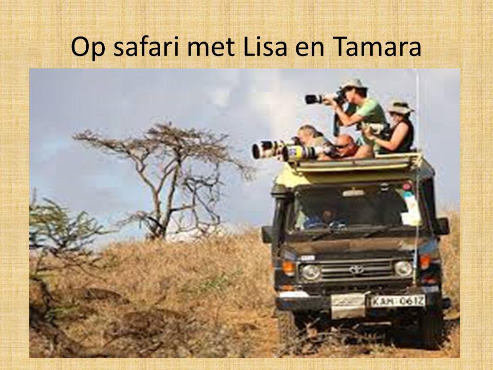 Op safari met Lisa en Tamara