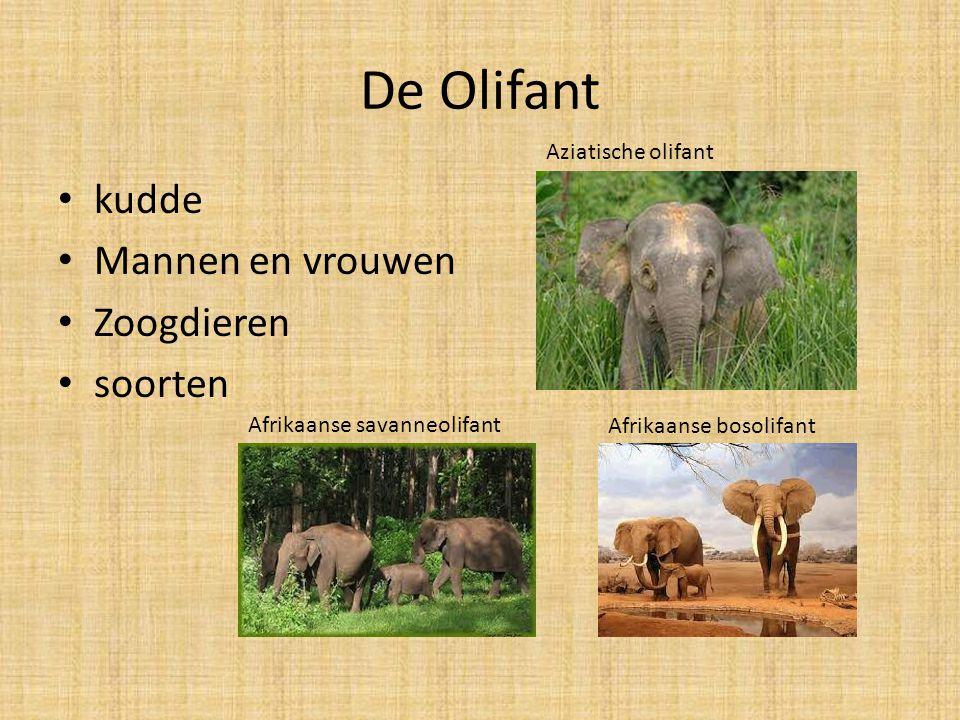 De Olifant kudde Mannen en vrouwen Zoogdieren soorten