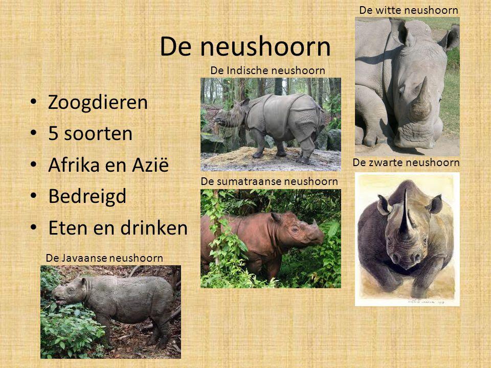 De neushoorn Zoogdieren 5 soorten Afrika en Azië Bedreigd