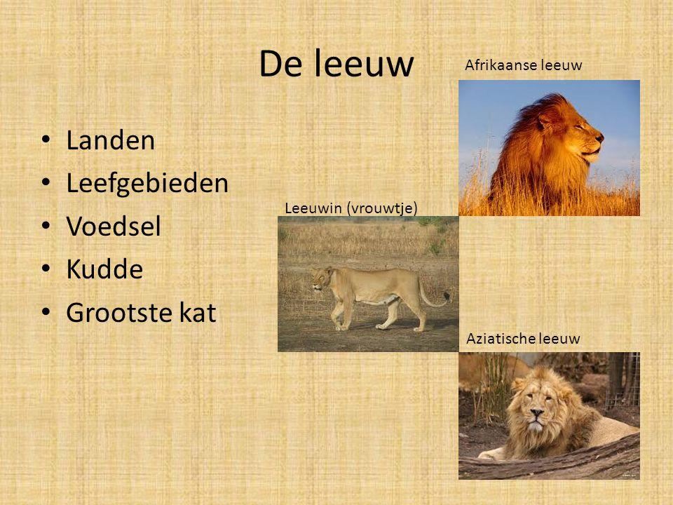 De leeuw Landen Leefgebieden Voedsel Kudde Grootste kat