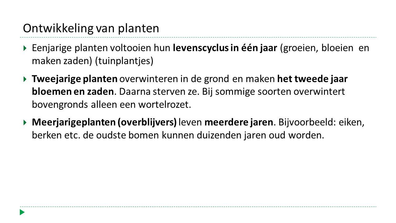 Ontwikkeling van planten
