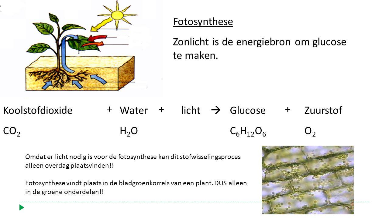 Zonlicht is de energiebron om glucose te maken.
