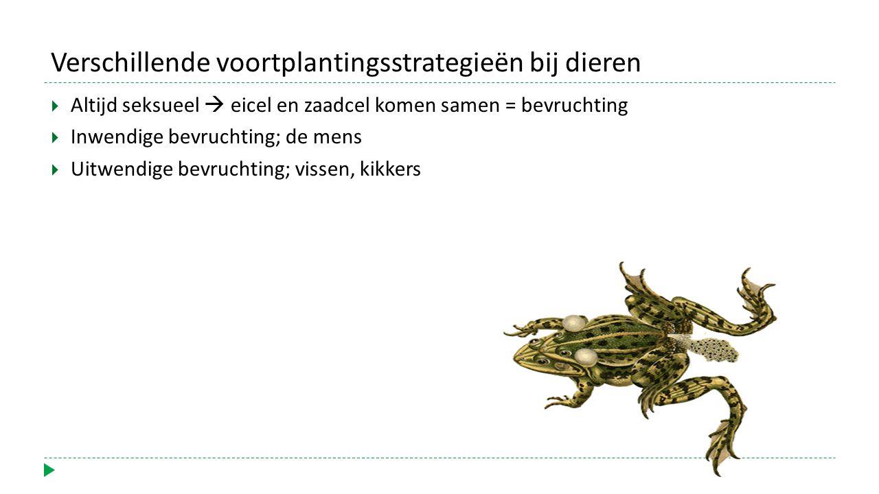 Verschillende voortplantingsstrategieën bij dieren