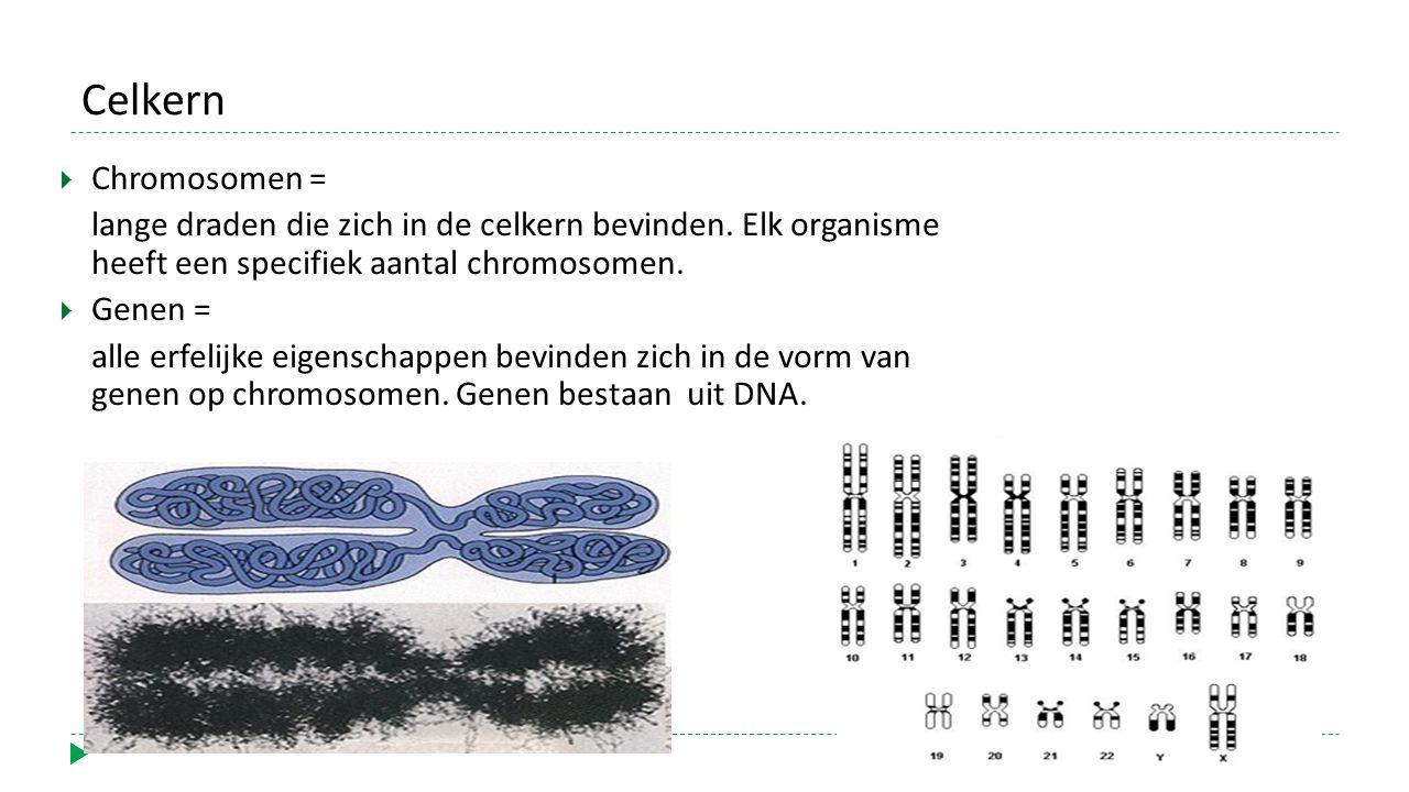 Celkern Chromosomen = lange draden die zich in de celkern bevinden. Elk organisme heeft een specifiek aantal chromosomen.