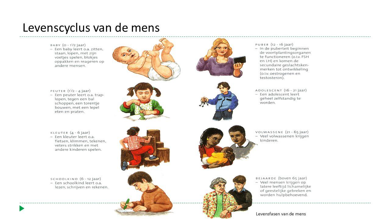 Levenscyclus van de mens
