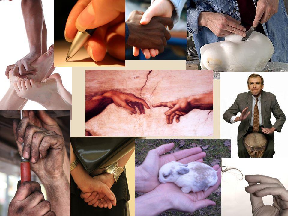 Handen gaan gebruiken voor -> verwijst naar de meervoudige intelligentie van Gardner