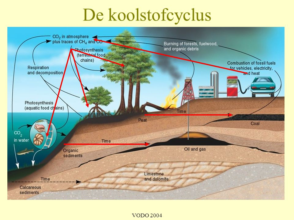 De koolstofcyclus VODO 2004