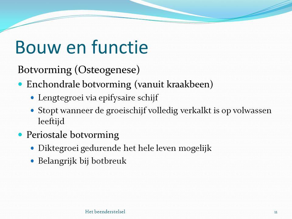 Bouw en functie Botvorming (Osteogenese)