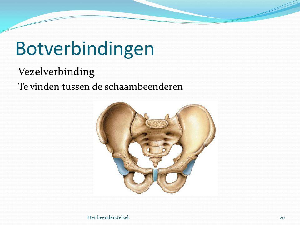 Botverbindingen Vezelverbinding Te vinden tussen de schaambeenderen