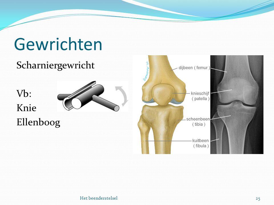 Gewrichten Scharniergewricht Vb: Knie Ellenboog Het beenderstelsel