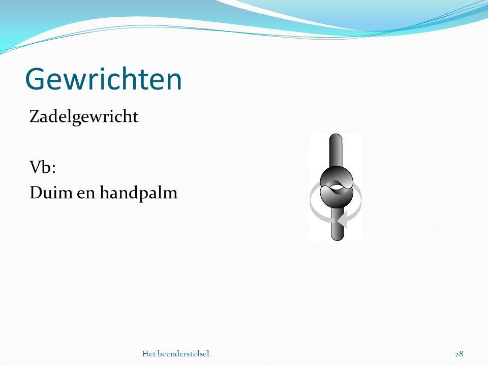 Gewrichten Zadelgewricht Vb: Duim en handpalm Het beenderstelsel