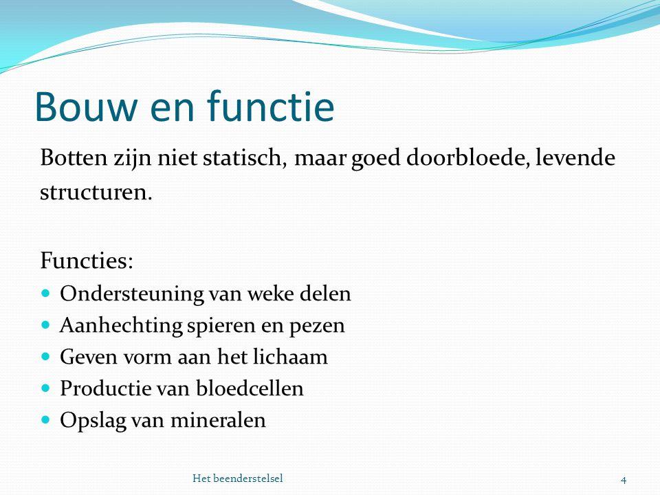 Bouw en functie Botten zijn niet statisch, maar goed doorbloede, levende. structuren. Functies: Ondersteuning van weke delen.