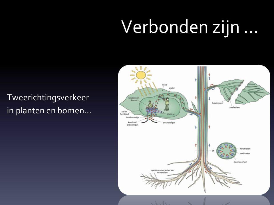 Verbonden zijn ... Tweerichtingsverkeer in planten en bomen…