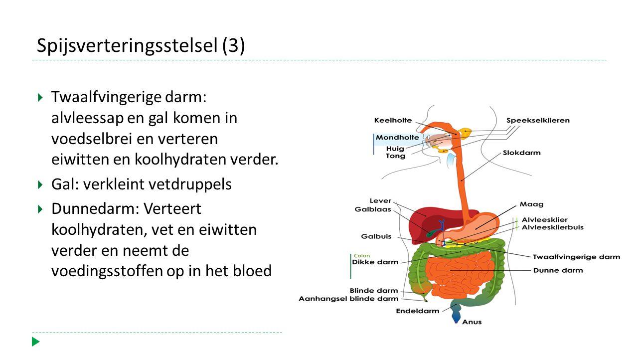 Spijsverteringsstelsel (3)