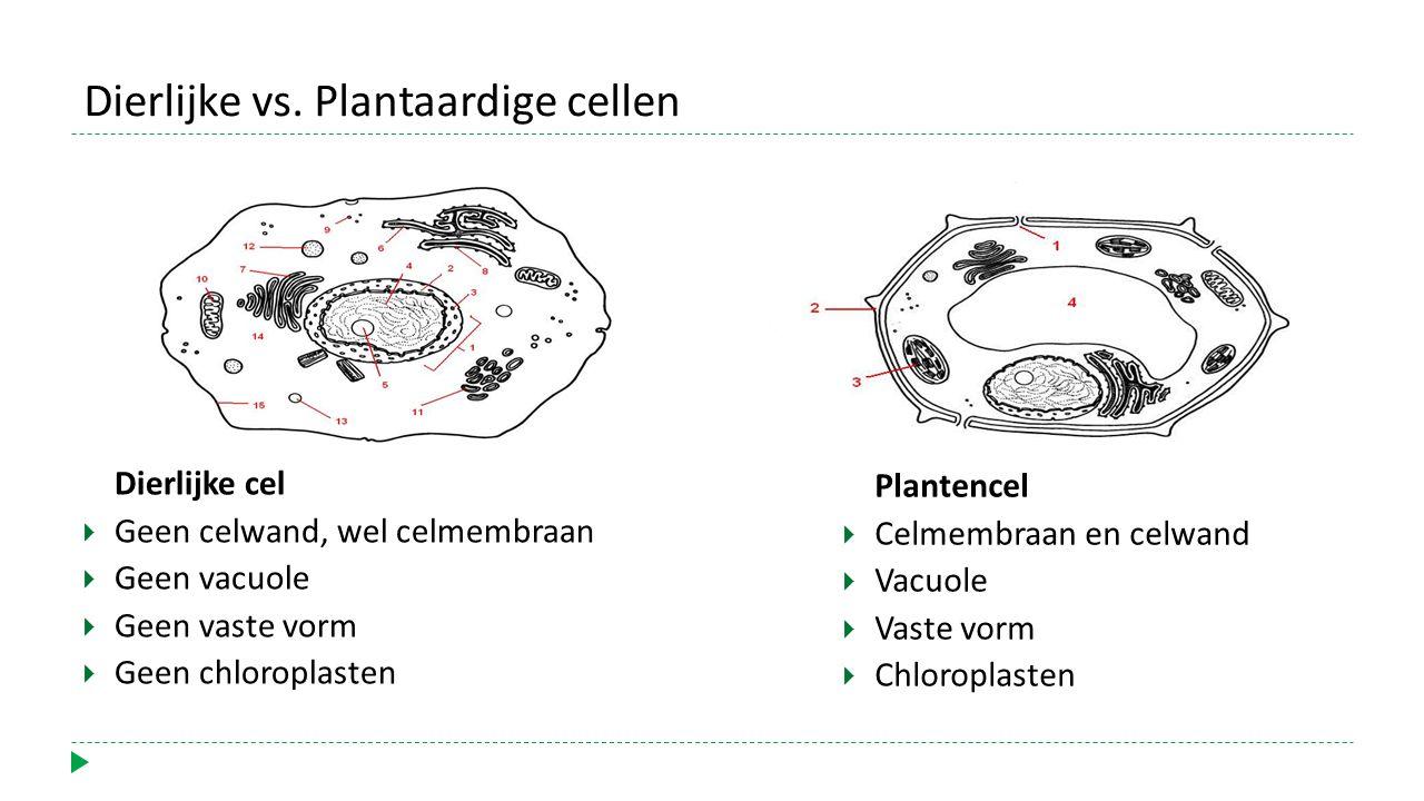 Dierlijke vs. Plantaardige cellen