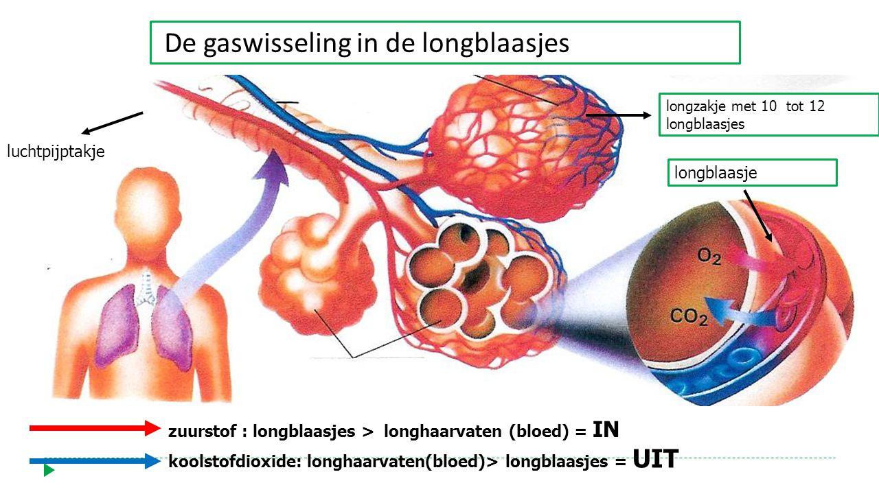 De gaswisseling in de longblaasjes