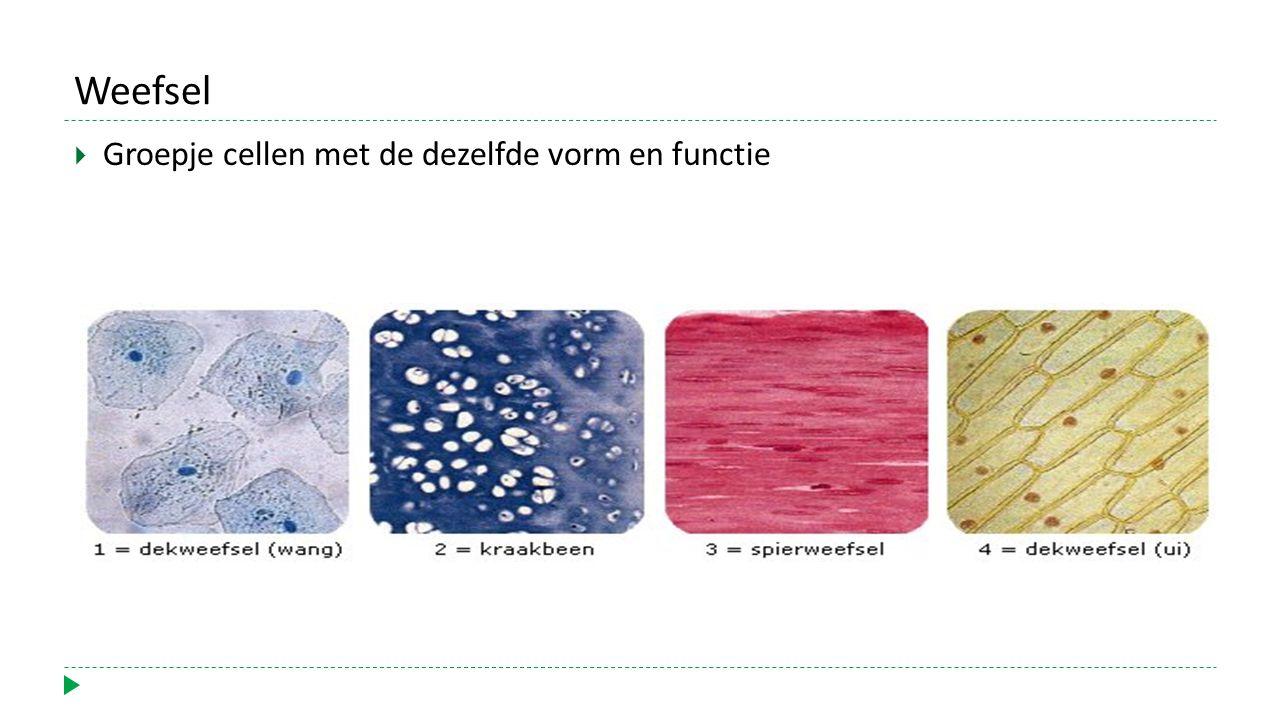 Weefsel Groepje cellen met de dezelfde vorm en functie