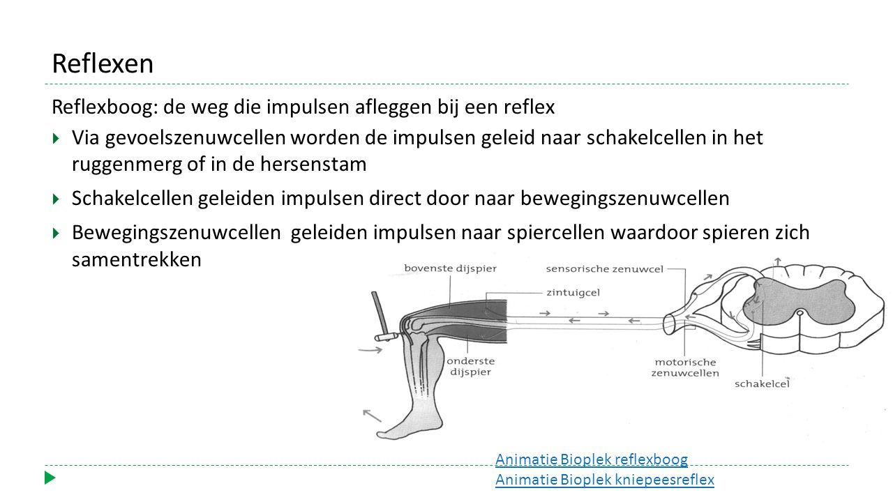 Reflexen Reflexboog: de weg die impulsen afleggen bij een reflex