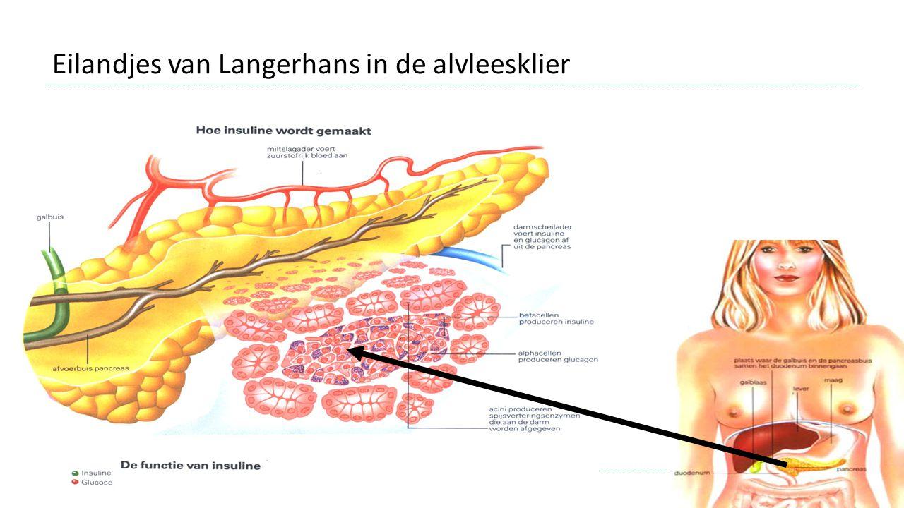 Eilandjes van Langerhans in de alvleesklier