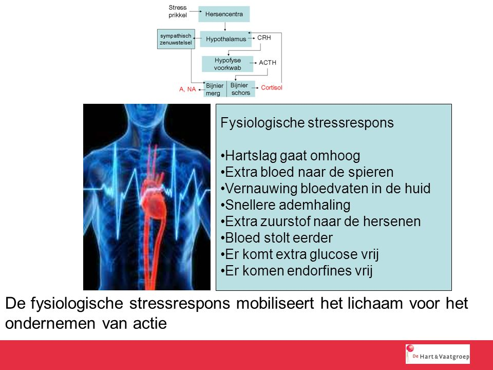Fysiologische stressrespons