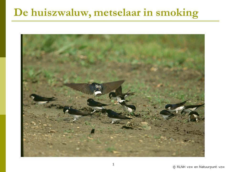 De huiszwaluw, metselaar in smoking