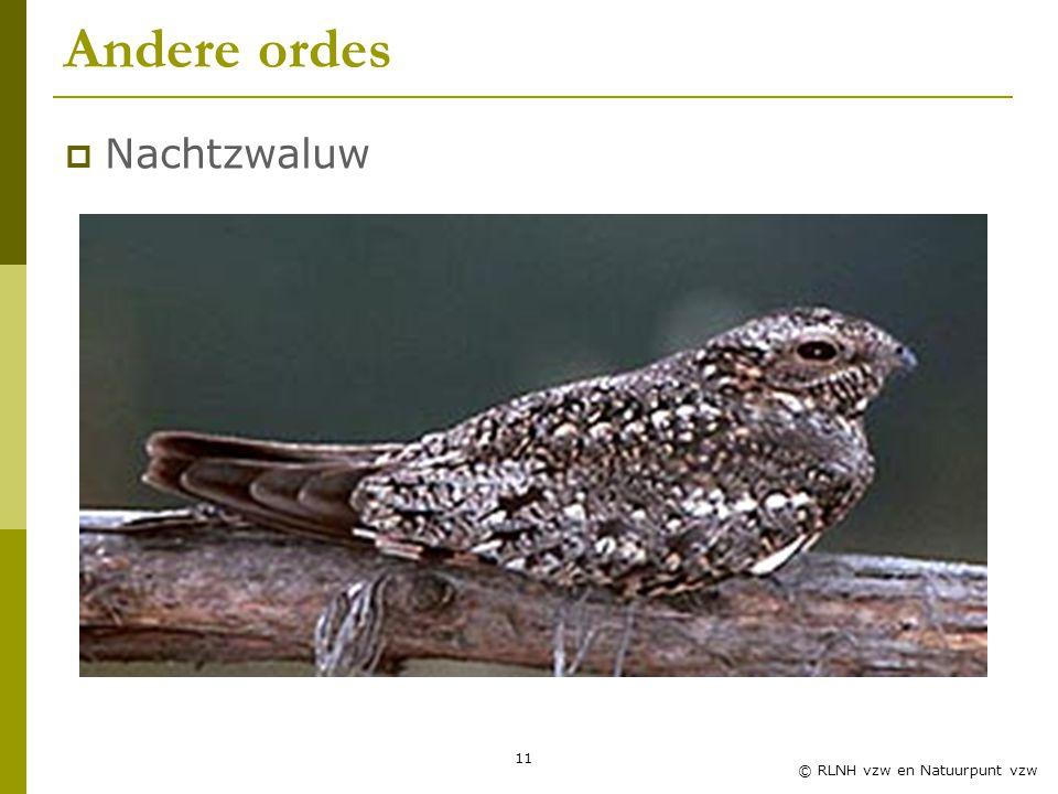 Andere ordes Nachtzwaluw Zwaluwles RLNH vzw