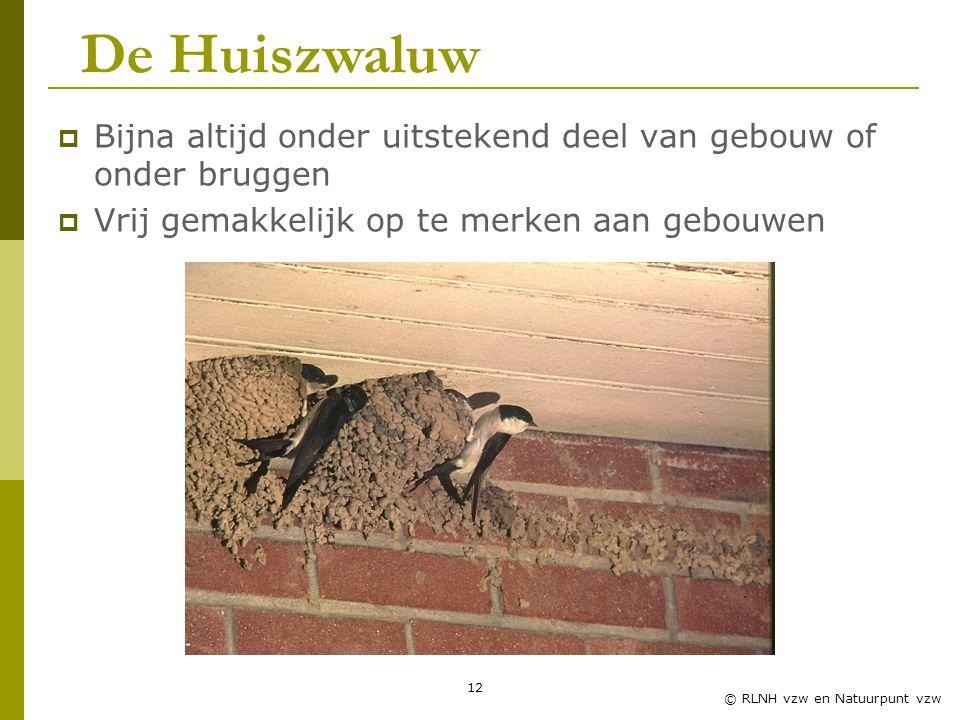 Zwaluwles RLNH vzw De Huiszwaluw. Bijna altijd onder uitstekend deel van gebouw of onder bruggen. Vrij gemakkelijk op te merken aan gebouwen.