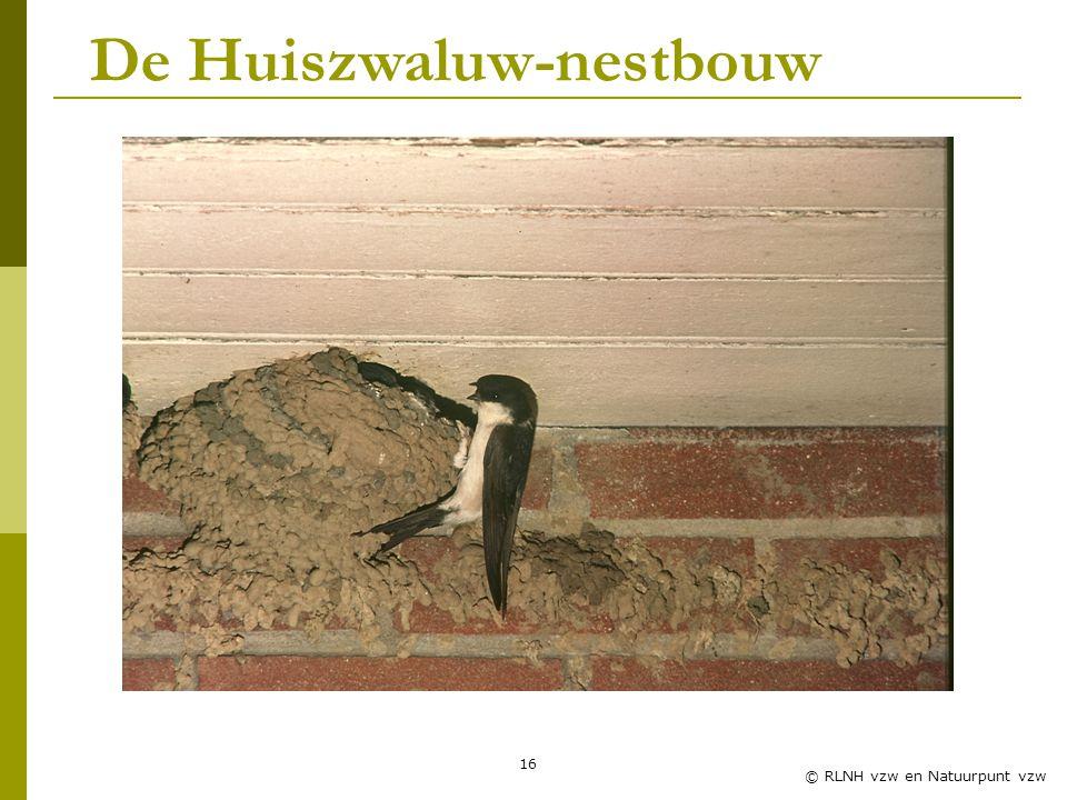 De Huiszwaluw-nestbouw