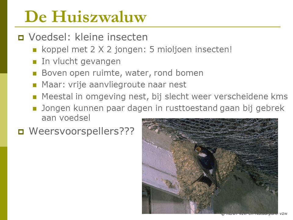 De Huiszwaluw Voedsel: kleine insecten Weersvoorspellers