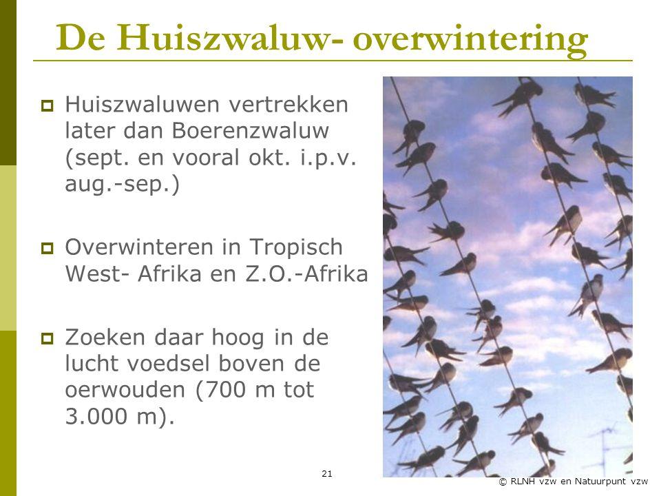 De Huiszwaluw- overwintering