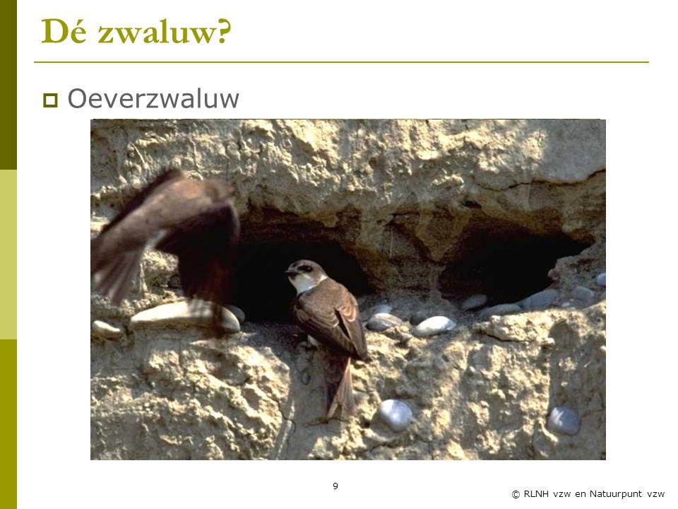 Dé zwaluw Oeverzwaluw Zwaluwles RLNH vzw