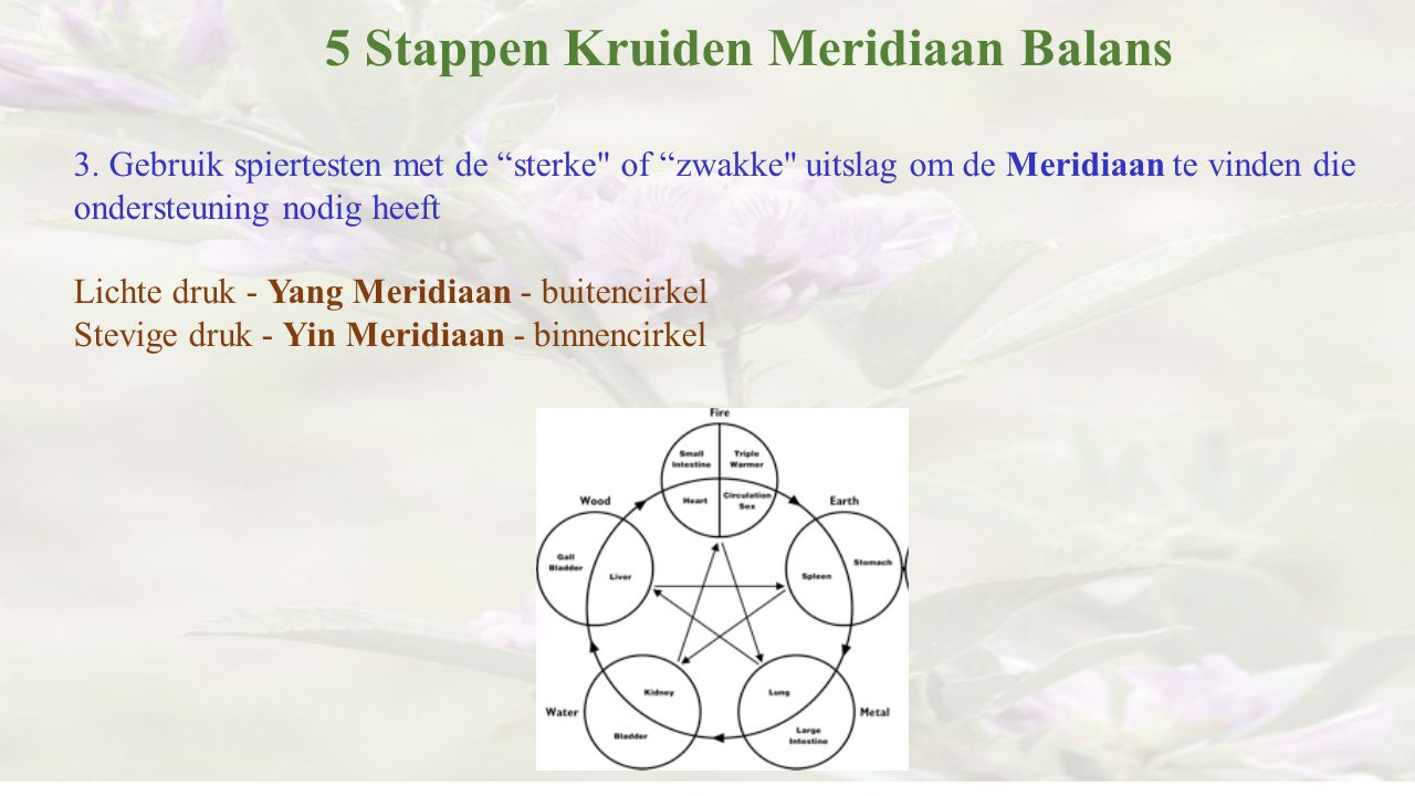 5 Stappen Kruiden Meridiaan Balans
