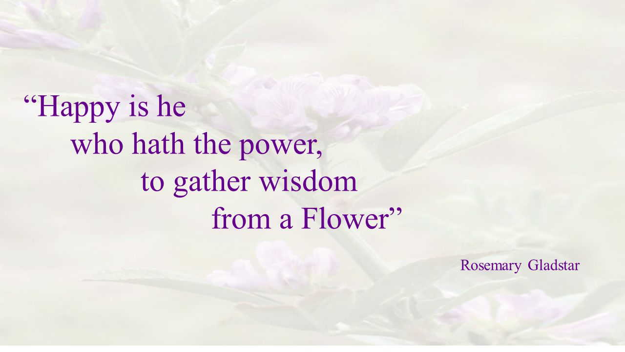 Happy is he who hath the power, to gather wisdom from a Flower
