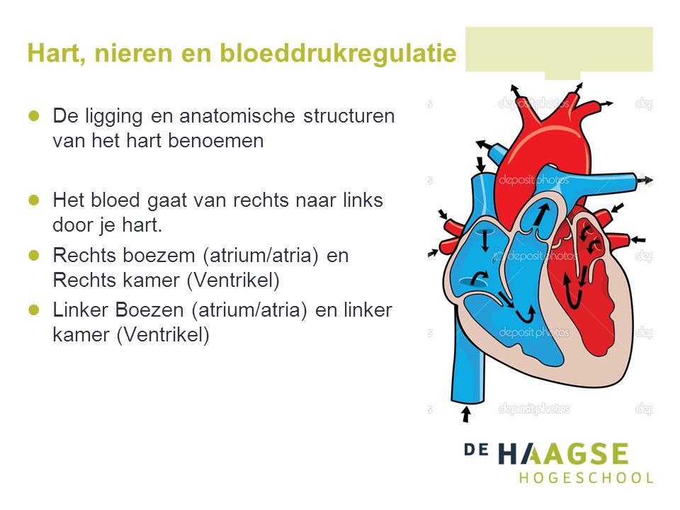 Hart, nieren en bloeddrukregulatie
