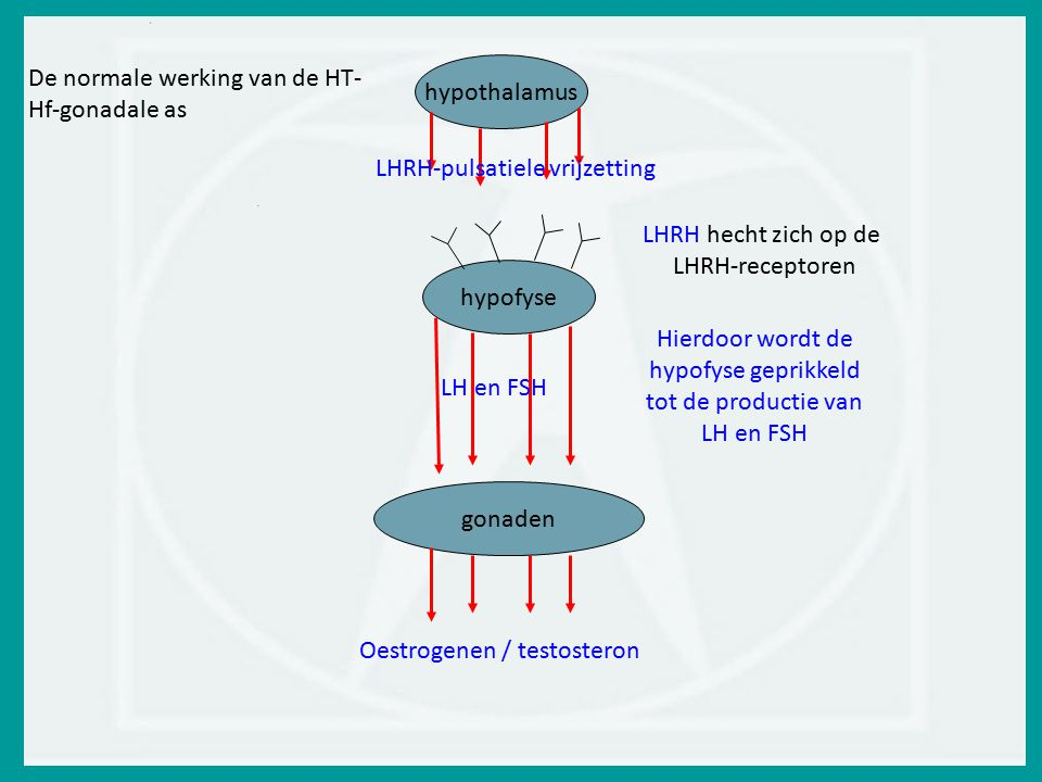 De normale werking van de HT-Hf-gonadale as hypothalamus