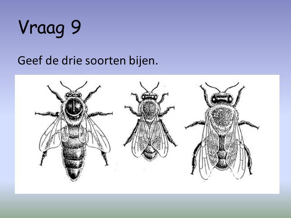 Vraag 9 Geef de drie soorten bijen.
