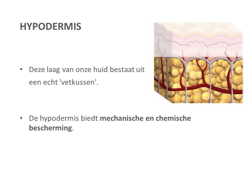 HYPODERMIS Deze laag van onze huid bestaat uit een echt vetkussen .